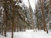 Skitrack в глубоком лесе Стоковые Фотографии RF
