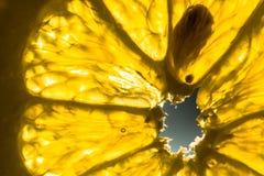 Skiva av den nya citronen i solljuset Arkivbilder