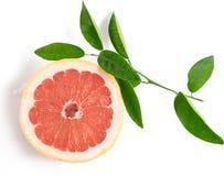 Skiva av grapefrukten som isoleras på vitbakgrund arkivbilder