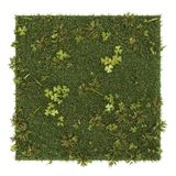 Skiva av kvadrerat gräs som isoleras på vit bakgrund