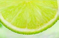 Skiva av limefrukt royaltyfri bild