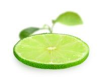 Skiva av ny limefrukt royaltyfri foto
