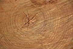 Skiva av trä Arkivbild