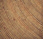 Skiva av trä med årliga cirklar Arkivbilder