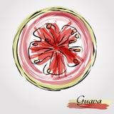 Skiva för guavafrukt Fotografering för Bildbyråer