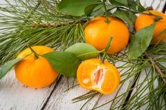 Skivade orange clementinetangerin med gräsplansidor och conife Royaltyfria Bilder