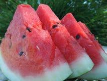 skivar vattenmelonen royaltyfri bild