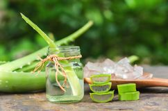 skivat och blad av ny aloe vera med nödvändig olja Royaltyfri Foto