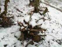 Skivat snöträd royaltyfri bild