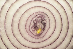 Skivatextur för purpurfärgad lök Royaltyfri Bild