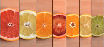 Skivor av sju olika citrusa variationer som är ordnade vid format Arkivfoton