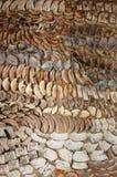 Skivor av torkade champinjoner Arkivbild