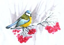 skizze Blaumeise, die auf einer Ebereschenniederlassung mit roten Beeren sitzt vektor abbildung
