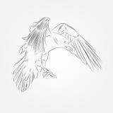 Skizze der Krähe im Vektor Stockbilder