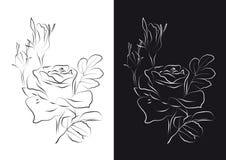 Skizze der Rosen Stockbild