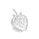 Skizze einer Erdbeere Stockfotografie