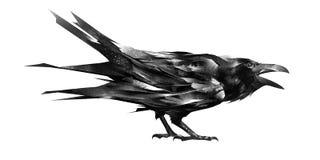 Skizze einer Krähe, die auf weißem Hintergrund sitzt Vektor Abbildung