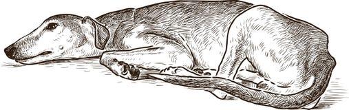 Skizze eines stillstehenden Windhunds Stockfoto