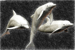 Skizze mit 3 Delphinen Lizenzfreies Stockfoto