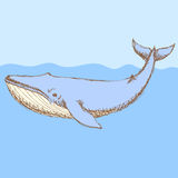 Skizze nettes whalel in der Weinleseart Stockfotografie