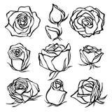 Skizze Rose Flower Set Bleistiftskizzenblumen mit Blättern auf Stamm Lizenzfreies Stockbild