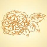 Skizze stieg mit Blättern, Vektorhintergrund Stockfoto