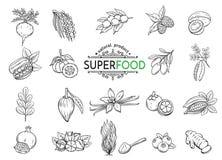 Skizze superfood Ikonen eingestellt vektor abbildung