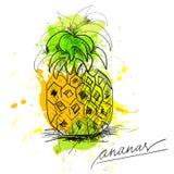 Skizze von Ananas Lizenzfreie Stockfotos
