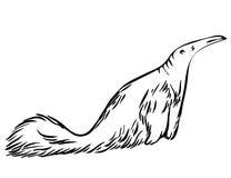Skizzen-Ameisenbär Lizenzfreies Stockbild