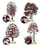 Skizzen-Baum verlässt Konzept des Entwurfes Stockfotos