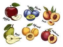 Skizzen des Apfels und der Birne, Pflaume, Aprikosenfrüchte lizenzfreie abbildung