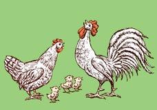 Skizzen einer Henne, des Hahnes und der Hühner Lizenzfreie Stockfotos