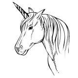 Skizzen-Einhorn, Hand gezeichnete Tintenillustration Einhornpferdetier Stockbild
