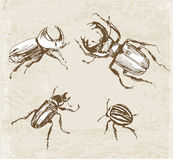 Skizzen von Käfern Von Hand gezeichnet mit Tinte I Lizenzfreie Stockfotografie