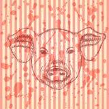 Skizzenkopf des Schweins, Vektorhintergrund Stockfoto