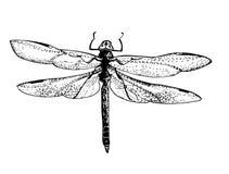 Skizzenlibelle - schöne Flügel Lizenzfreies Stockbild