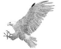 Skizzenschwarzlinie des Weißkopfseeadlerlandungsangriffs-Handabgehobenen betrages auf weißem Hintergrund Lizenzfreies Stockbild