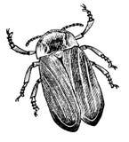 Skizzentätowierung - Insektenkäferschale Stockbilder