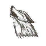 Skizzenvektorillustration des Wolfs Lizenzfreies Stockbild
