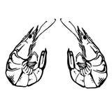 Skizzenweinlese-Garnelenzeichnung Stockbild