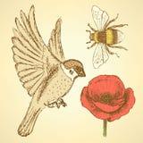 Skizzieren Sie Mohnblume, Biene und Spatzen in der Weinleseart Stockfotografie
