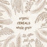 Skizzierte Hand gezeichnete Getreide Stockfoto