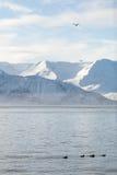Skjalfandi Bay Royalty Free Stock Photo