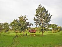 Skjul i ricefältet Arkivbilder