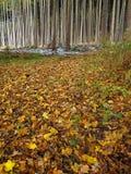 Skjulet lämnar blödigt på skoggolv på nedgången Arkivbild