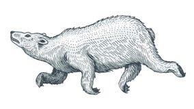 Skjuta i höjden isbjörnen Löst arktiskt vitt hoppa för djur Monokrom tappningstil Den drog inristade handen skissar för tatuering royaltyfri illustrationer