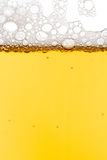 skjuten öl Arkivbild