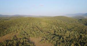 Skjuten antenn: Flyg över den gröna skogen i de Carpathian bergen stock video