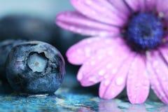 skjuten blåbärmakro Arkivfoto