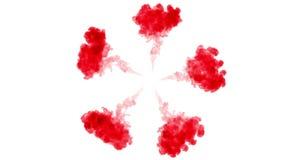 Skjuten fast utgift Flöte för röd färg i vatten och flyttning i ultrarapid Bruk för bläckig bakgrund eller bakgrund med rök eller arkivfilmer
